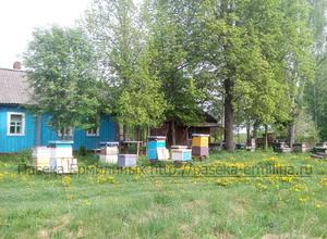 ульи с пчёлами