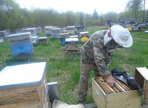 работа на пасеке, отец пчеловод