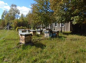 купить пчелопакеты карпатской породы в Брянске в Смоленске