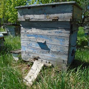 пчелосемья карпатка